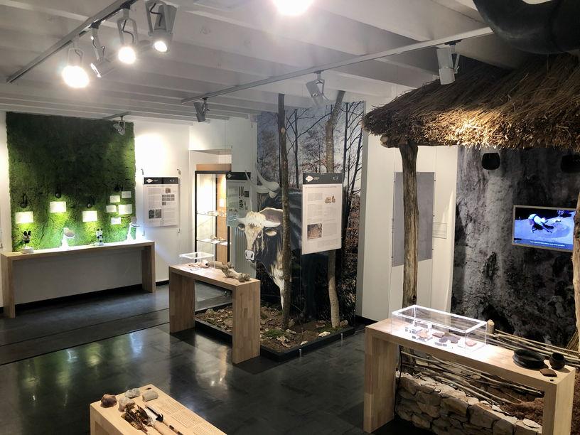 Espace Archéologique Départemental - Exposition - Roquemissou - Salle 1