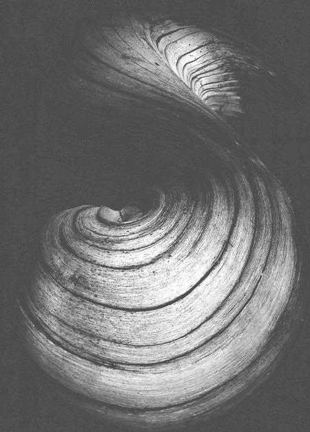 La-racine-de-Saule-Dieuzaide