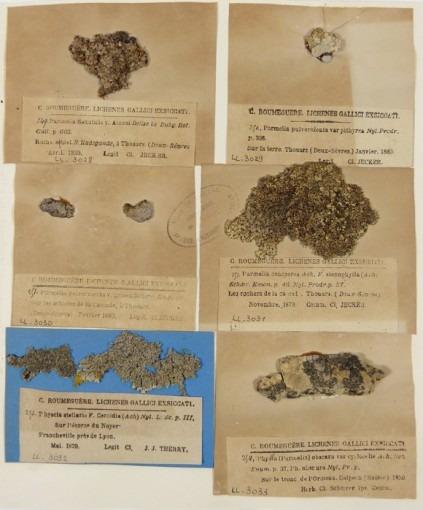 Herbiers, Lichens