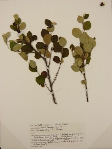 Herbiers, Merial