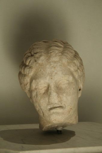 Tête de Grande Herculanaise