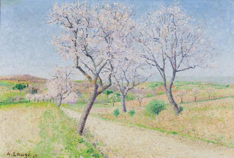 Route de Cailhavel, amandiers en fleurs