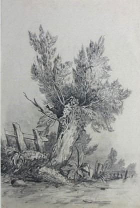 Etude d'arbre, Le saule
